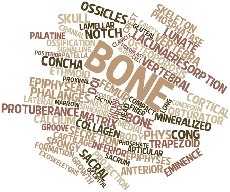 Abstract word cloud for Bone with related tags and terms Stock Photo - 16678385