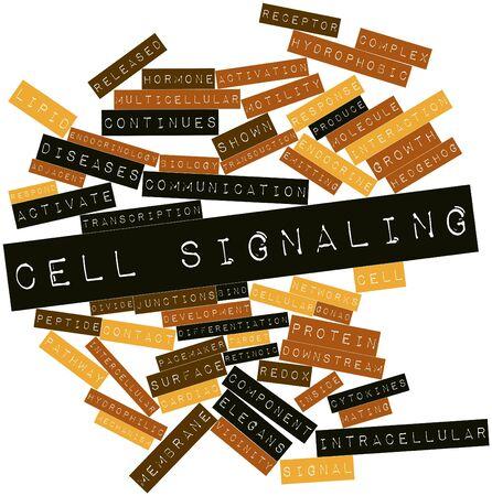 protease: Nube palabra abstracta para Se�alizaci�n celular con etiquetas y t�rminos relacionados Foto de archivo