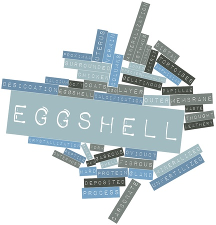 Abstract word cloud for Eggshell with related tags and terms Stock Photo - 16678274