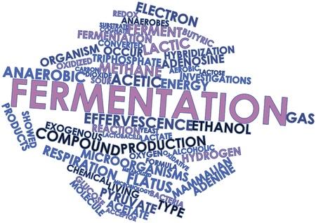関連タグと用語発酵の抽象的な単語の雲