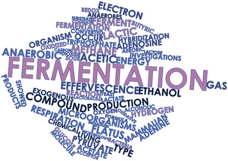 Abstract word cloud for Fermentation with related tags and terms Stock Photo - 16678365