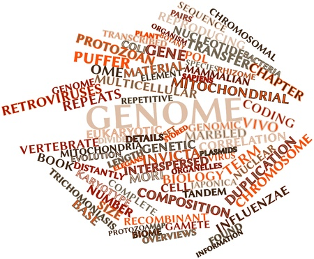 gamete: Abstract word cloud for Genome with related tags and terms Stock Photo