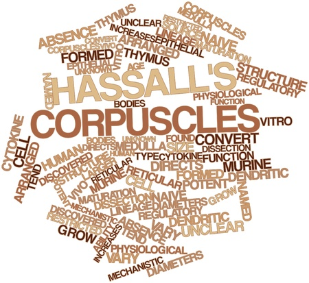 lineage: Abstract word cloud for Hassalls corpuscles with related tags and terms