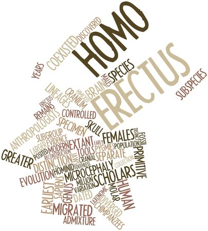 Abstract word cloud for Homo erectus with related tags and terms