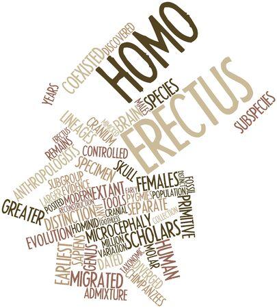 erectus: Nube palabra abstracta para el Homo erectus con etiquetas y t�rminos relacionados