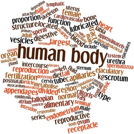 ovarios: Nube palabra abstracta para el cuerpo humano con las etiquetas y t�rminos relacionados