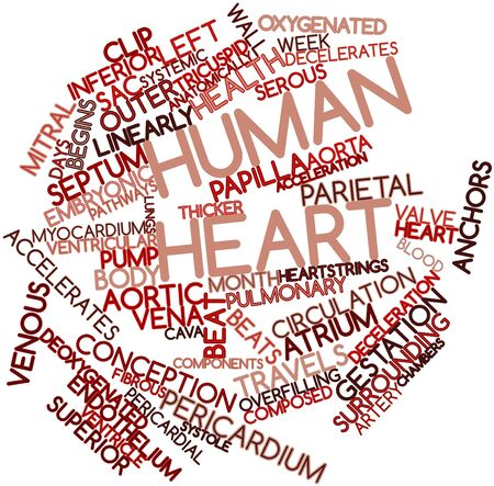 Abstract word cloud for Human heart with related tags and terms photo