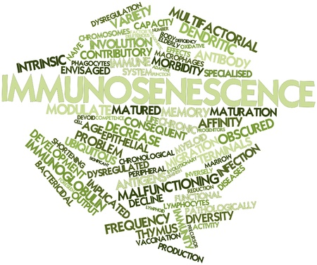 macrophages: Abstract word cloud for Immunosenescence with related tags and terms