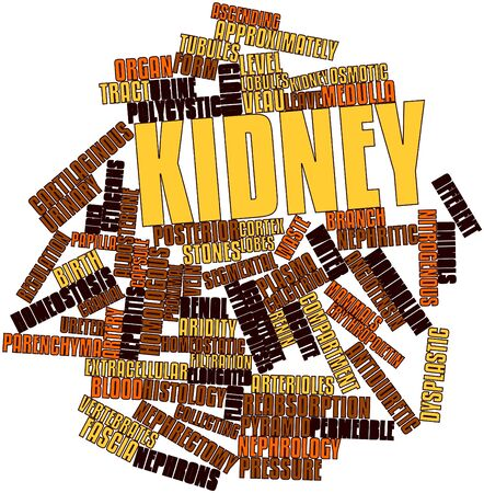 word clouds: Abstract word cloud for Kidney with related tags and terms