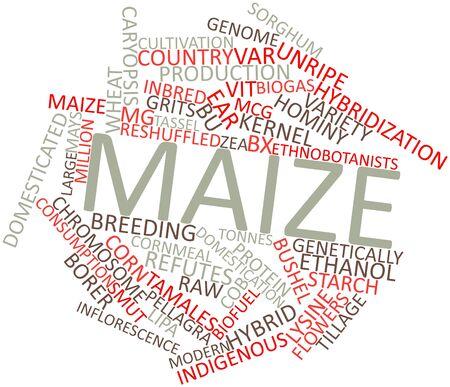 関連するタグと用語とトウモロコシの抽象的な単語雲
