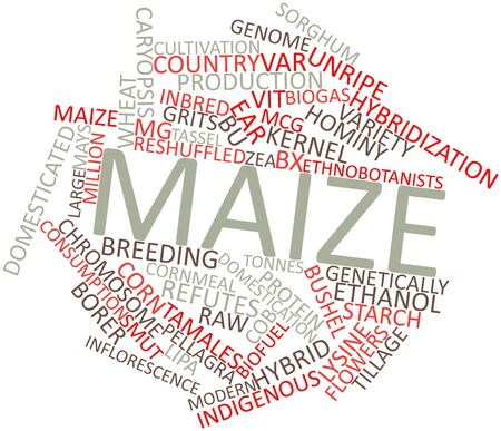 subspecies: Abstract word cloud for Maize with related tags and terms
