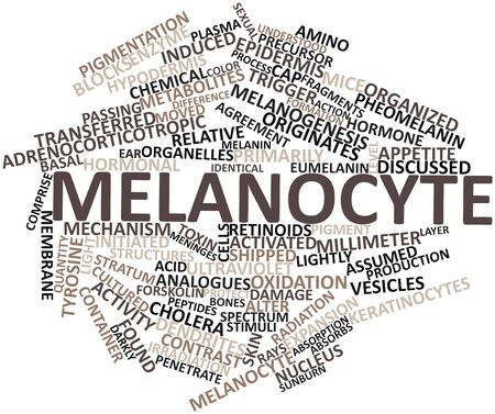 precursor: Abstract word cloud for Melanocyte with related tags and terms