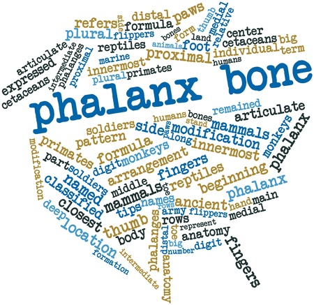 distal: Abstract word cloud for Phalanx bone with related tags and terms