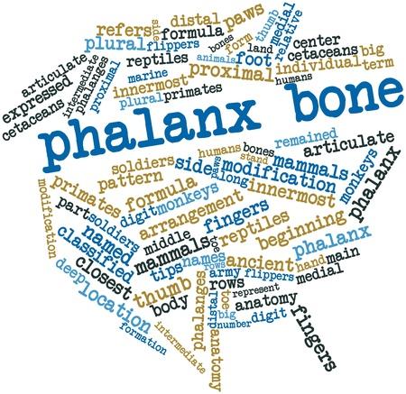 distal: Nube palabra abstracta para el hueso falange con las etiquetas y términos relacionados
