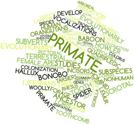 Abstract word cloud for Primate with related tags and terms Stock Photo - 16678390