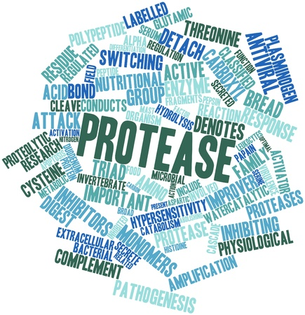 optimal: Abstract word cloud for Protease with related tags and terms Stock Photo