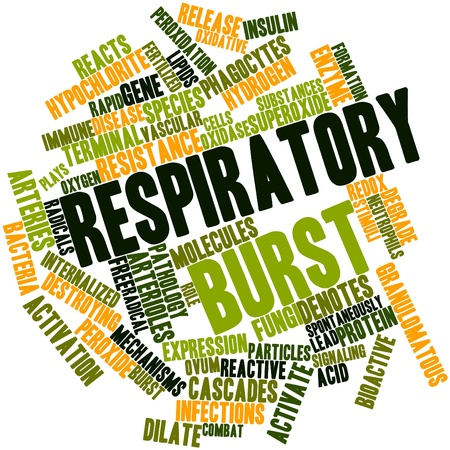 oxidative: Abstract word cloud for Respiratory burst with related tags and terms Stock Photo