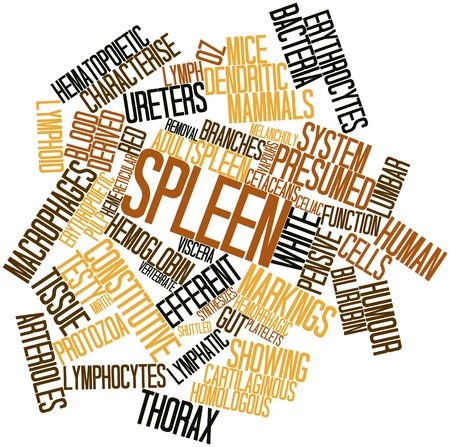 macrophages: Abstract word cloud for Spleen with related tags and terms Stock Photo