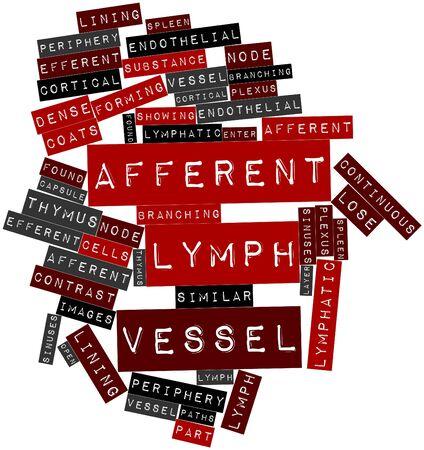 periferia: Word cloud astratto per vaso linfatico afferente con tag correlati e termini