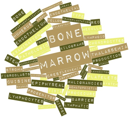 Abstract word cloud for Bone marrow with related tags and terms photo