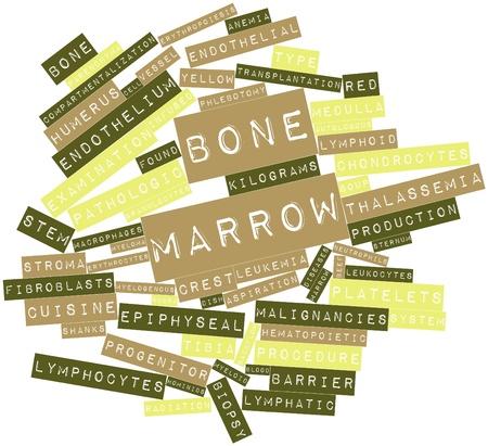 médula: Nube palabra abstracta para médula ósea con etiquetas y términos relacionados