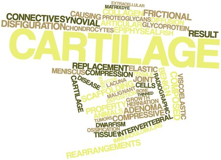 salivary: Abstract word cloud for Cartilage with related tags and terms