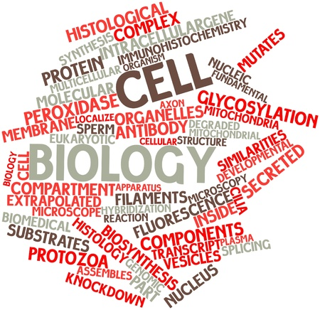 Abstract word cloud for Cell biology with related tags and terms Stock Photo - 16679089