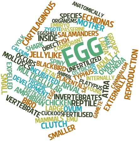 Abstract word cloud for Egg with related tags and terms