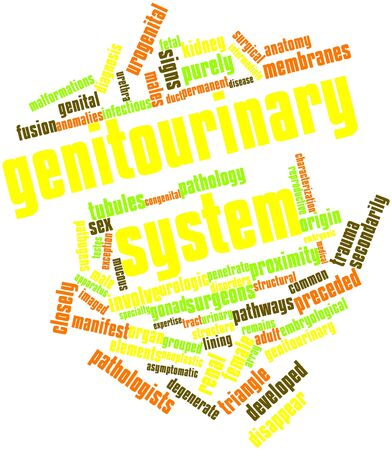 Abstract word cloud for Genitourinary system with related tags and terms photo