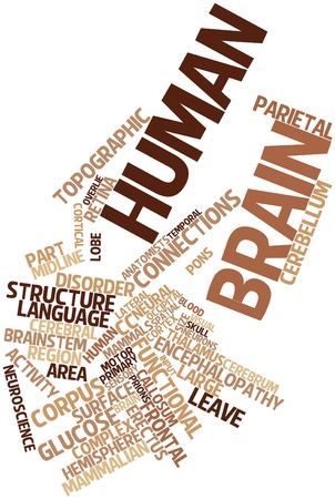 encephalopathy: Abstract word cloud for Human brain with related tags and terms Stock Photo