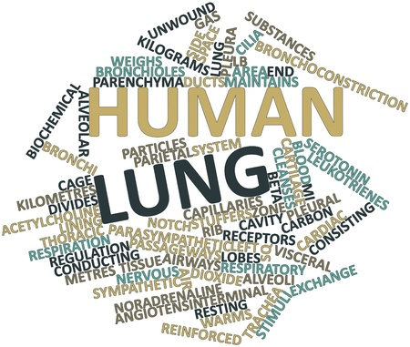 Abstract word cloud for Human lung with related tags and terms Stock Photo - 16679018