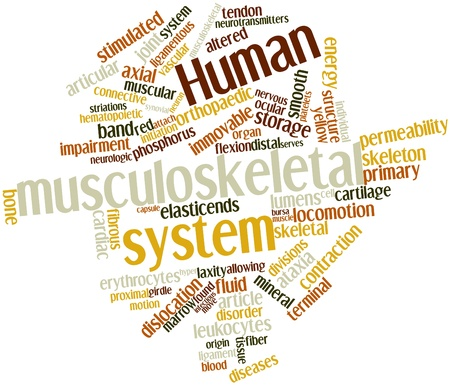 proximal: Abstract word cloud for Human musculoskeletal system with related tags and terms Stock Photo