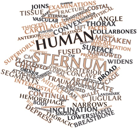 Abstract word cloud for Human sternum with related tags and terms photo