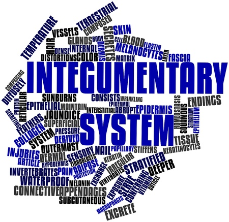 macrophages: Abstract word cloud for Integumentary system with related tags and terms