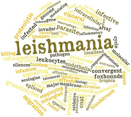 Abstract word cloud for Leishmania with related tags and terms Stock Photo - 16679005