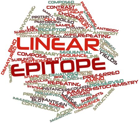 epitope: Abstract word cloud for Linear epitope with related tags and terms Stock Photo