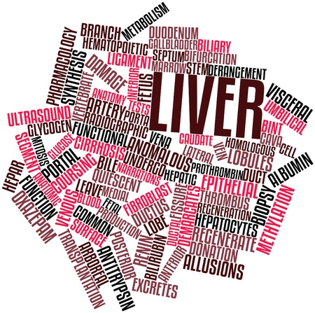fibroblast: Abstract word cloud for Liver with related tags and terms