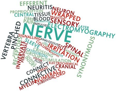 synoniem: Abstracte woord wolk voor Nerve met gerelateerde tags en termen