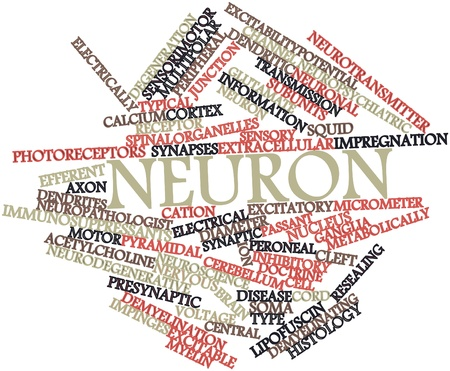 Abstract word cloud for Neuron with related tags and terms Stock Photo - 16679217