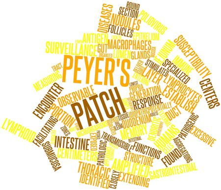 Abstract word cloud for Peyer's patch with related tags and terms Stock Photo - 16679197