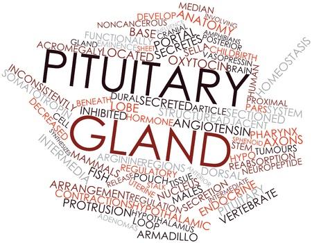 hipofisis: Nube palabra abstracta por la gl�ndula pituitaria con las etiquetas y t�rminos relacionados Foto de archivo