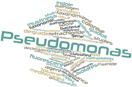 susceptibility: Abstract word cloud for Pseudomonas with related tags and terms Stock Photo