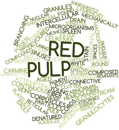 macrophages: Abstract word cloud for Red pulp with related tags and terms