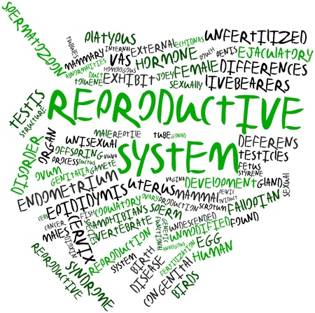 Abstract word cloud for Reproductive system with related tags and terms Stock Photo - 16679177