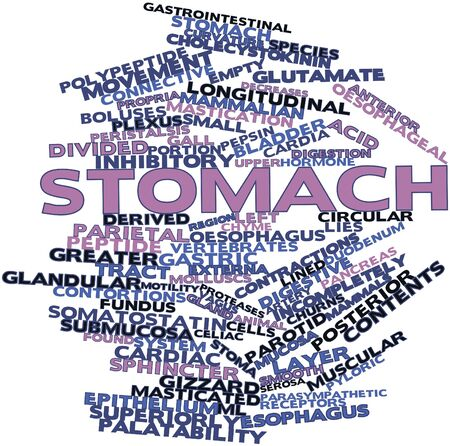 receptors: Abstract word cloud for Stomach with related tags and terms