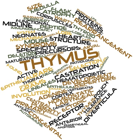 histamine: Abstract word cloud for Thymus with related tags and terms