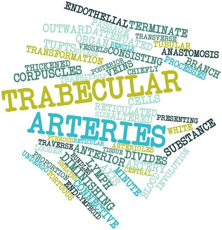 arteries: Abstract word cloud for Trabecular arteries with related tags and terms Stock Photo