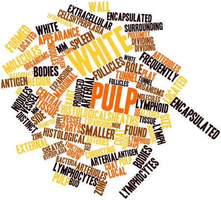Abstract word cloud for White pulp with related tags and terms Stock Photo - 16679226