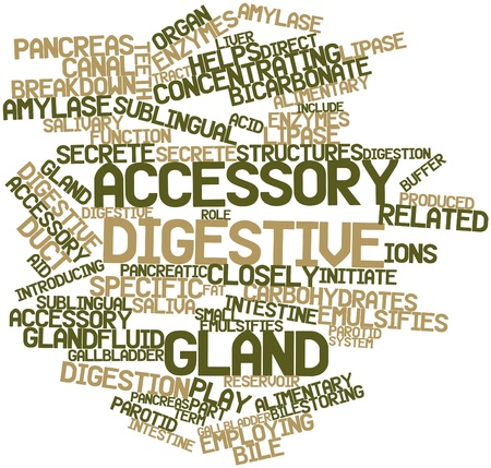 secrete: Abstract word cloud for Accessory digestive gland with related tags and terms Stock Photo