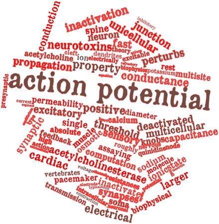 potential: Abstract word cloud for Action potential with related tags and terms